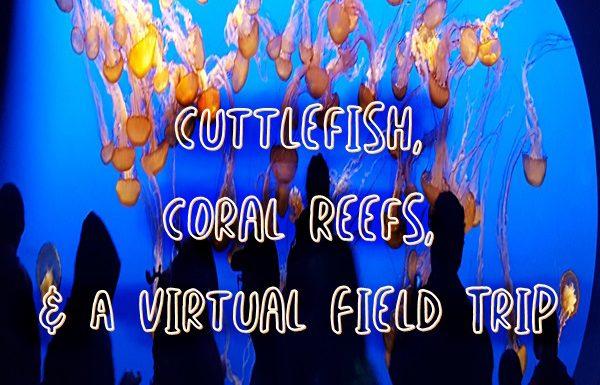 cuttlefish-coral-reefs-field-trip