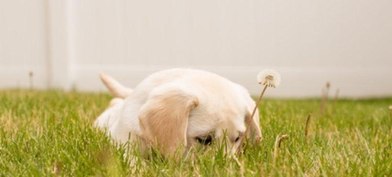 eric-hill-spot-puppy-doodlemom-banner